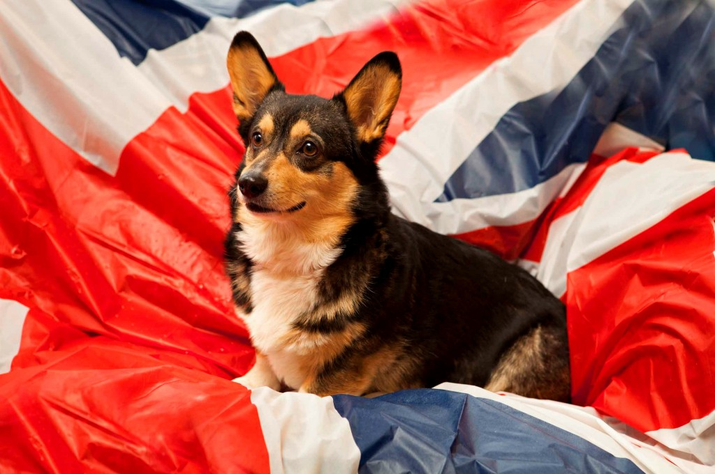 corgi diamond jubilee flag sofa