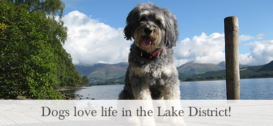 Dogs love life in the Lake District!
