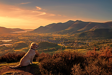 Dogs love life in the Lake District