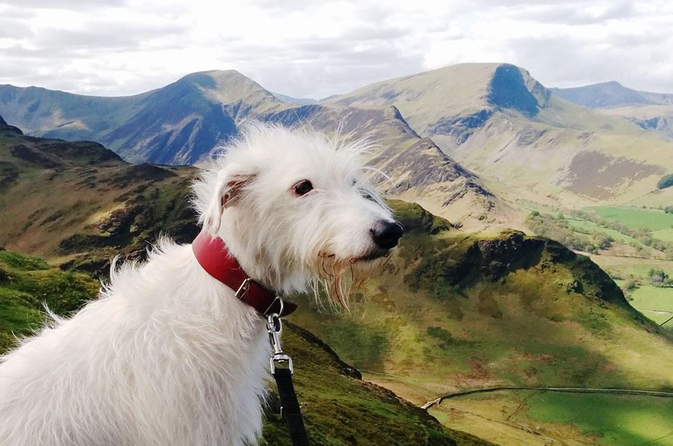 Dog Friendly Hotels Lake District Dog Friendly Accommodation