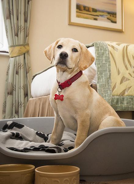 Dog Friendly Hotels Ullswater
